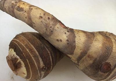 板持海老芋の画像